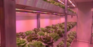lattuga-vertical-farm-macfrut-maggio-2017-schermata-video-barbara-righini