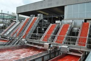 lavorazione-pomodoro-fonte-oi-pomodoro-da-industria-del-nord-italia