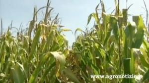mais-progetto-combi-mais-fonte-tommaso-cinquemani-agronotizie
