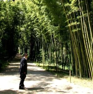 Il bambù gigante e la bolla speculativa