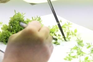 Micropropagazione e tecnologie in vitro
