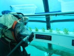 nemo-s-garden-ocean-reef