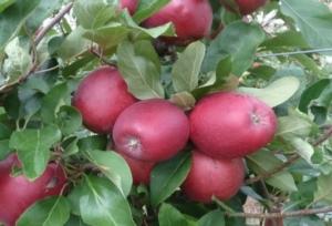 openday-zanzi-vivai-lea-agricoltura-2015