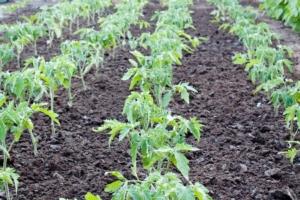 orticoltura-campi-agricoltura-by-orcea-david-fotolia-750