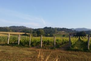 paesaggio-toscana-viti-colline-case-coloniche-by-matteo-giusti-agronotizie-jpg1