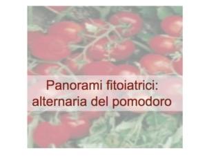 Panorami fitoiatrici: alternaria del pomodoro