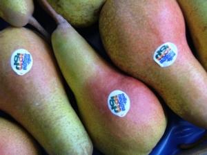 La pera Igp dell'Emilia Romagna rinnova il disciplinare - Plantgest news sulle varietà di piante