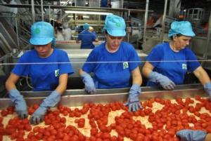 pomodoro-da-industria-lavorazione-in-stabilimento-fonte-oi-pomodoro-industria-nord-italia