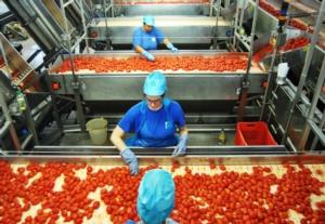 pomodoro-lavorazione-in-stabilimento-fonte-pomodoro-industria-nord-italia