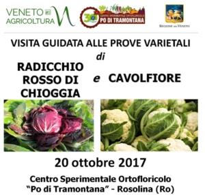 radicchio-chioggia-cavolfiore-prove-sperimentali-20171020