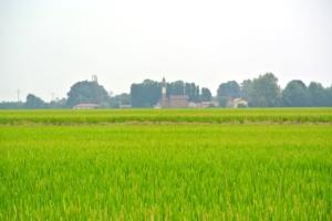 Sì a propanile in risaia per 120 giorni