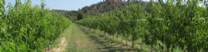 rootpac-20-portainnesti-alberi-da-frutto-fonte-agromillora