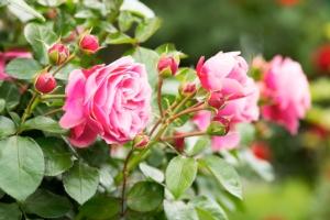 Esperti in colture ornamentali