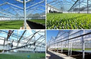 Serra 2.0: clima ed input tecnici per una serra sostenibile - Plantgest news sulle varietà di piante