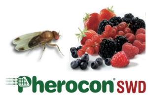 sipcam-pherocon-drosophila-aperetura