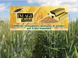 sumitomo-image-gold