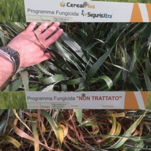 syngenta-in-campo-seguris-xtra-prove-in-campo-2015-byagncs