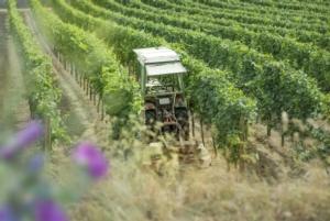 trattore-vigneto-macchine-agricole-vite-by-satware-ag-fotolia-750