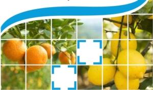 Penncozeb® DG: per la difesa sostenibile degli agrumi