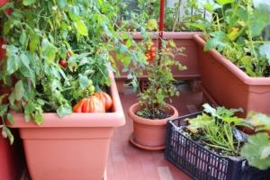 Urban farming, quando le città si sfamano da sole