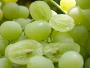 uva-da-tavola-confronto-con-e-senza-semi-fonte-mario-colapietra1