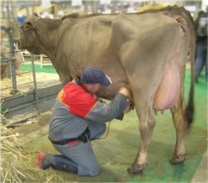 Multe latte, ora tocca alle regioni