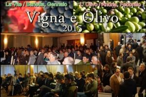 vigna-e-olivo-2015