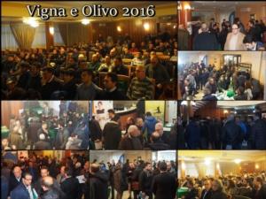 Vigna e olivo, resoconto 2016
