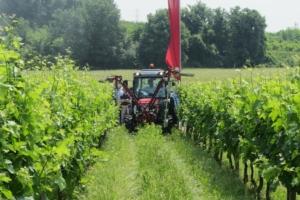 vigneto-lavorazioni-trattori-massey-ferguson-cimatura-giugno-2013-by-agronotizie-cspadoni