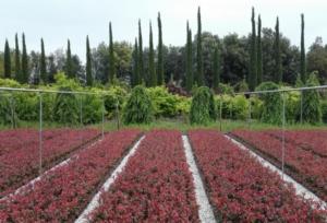 Vivaismo, tutte le agevolazioni sulle assicurazioni anti calamità - Plantgest news sulle varietà di piante