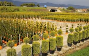 Protezione delle piante, primo ok dall'Ue alle nuove misure