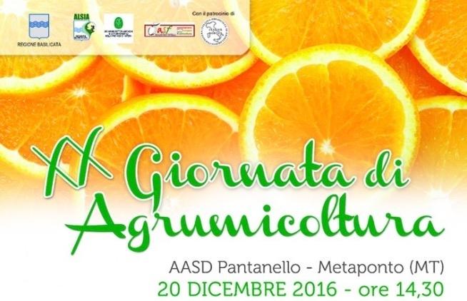 20-giornata-agrumicoltura-pantanello-alsia-pantanello
