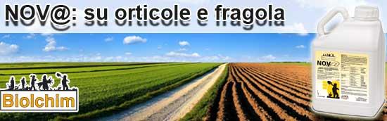 20100212_Cop_Nov_orticole-fragola