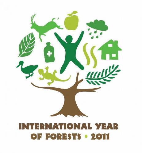 2011-anno-internazionale-delle-foreste