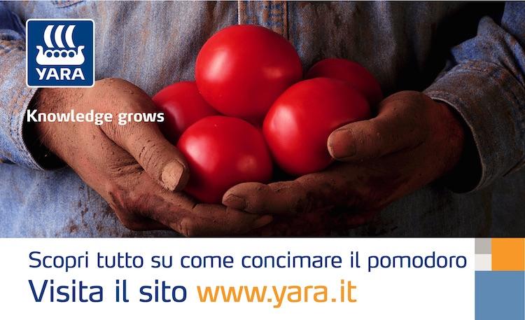 20160502-redazionale-pomodoro-sviluppo-vegetativo-yara