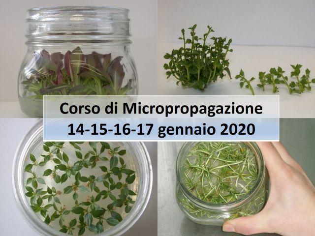2020-corso-micropropagazione-silvio-fritegotto