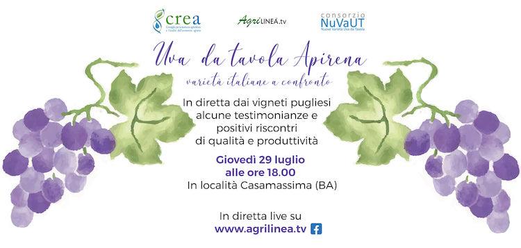 20210729-evento-uva-da-tavola-apirena-fonte-agrilinea.jpg