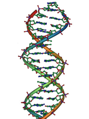 250px-DNA_Overview_it_NEW2