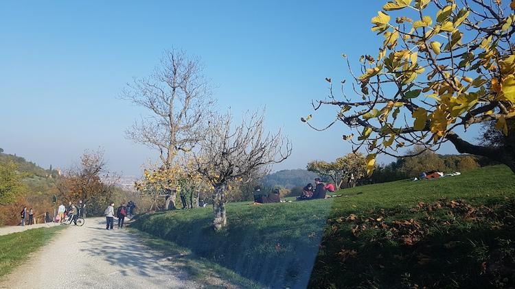 5-parco-villa-ghigi-novembre-2020-articolo-pubblici-giardini-20210224-fonte-teresa-guerra-750x422.jpeg
