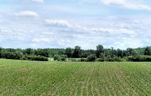 Agricoltura-5