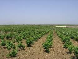 Agricoltura_2_250