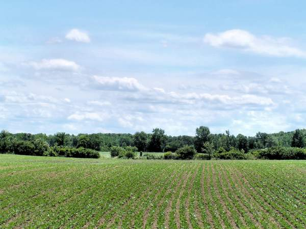 Agricoltura_51