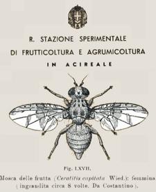 CRA-agrumicoltura-sistemi-innovativi-monitoraggio-difesa-20080327