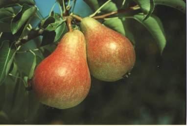 Dalmonte, piante e varietà frutticole per tutti i gusti ...