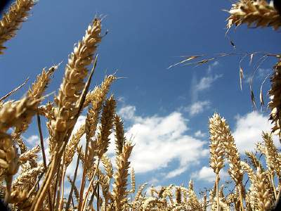 Cereali-1_4001.jpg