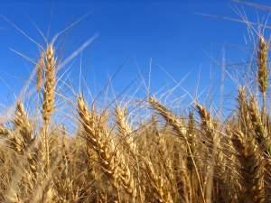 Cereali_300
