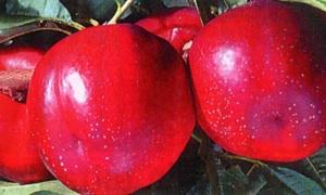 La bomba precoce tra le nettarine - Plantgest news sulle varietà di piante