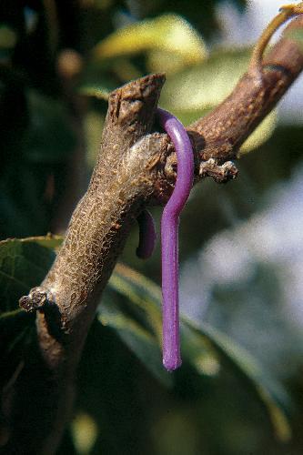 Ecodian-disorientamento-sessuale-bioplastica-materBi