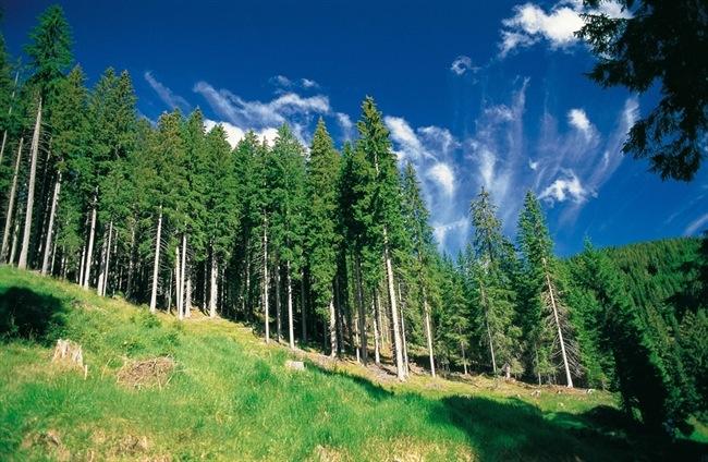 Foresta-fondazione-edmund-mach-2012