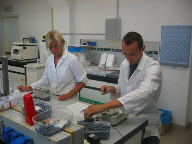 LaboratorioVigalzanoRicercaPiccoliFrutti